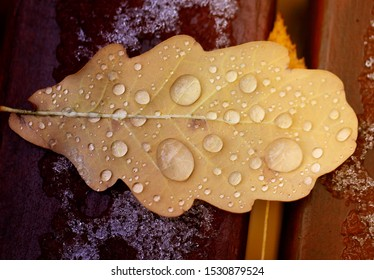 Photo macro beautiful autumn oak leaf with water drops in the forest
