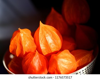 Photo macro beautiful bright physalis lit by the sun