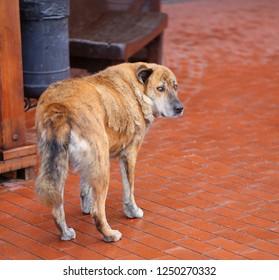 Photo macro portrait of a big shaggy dog outdoors