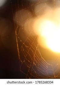 Photo macro sunlight sunset and web. Photo of a spider web for a website or poster of autumn.