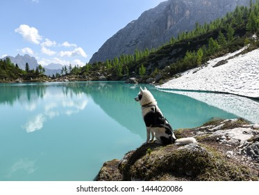 Photo of a male alaskan husky sitting on a rock next to Lago di Sorapis. The water is a clear blue, the sun is shining and next to the lake is a large patch of unmelted snow