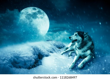 Photo Manipulation. Landscape at snowfall with super moon. Majestic night with full moon on sky in winter. Siberian Husky sitting in the snow. Serenity nature background. The moon taken with my came