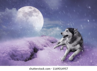 Photo Manipulation. Landscape at snowfall with super moon. Majestic night with full moon on sky in winter. Siberian Husky sitting in the snow. Serenity nature background. The moon taken with my camera