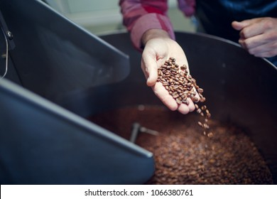 Photo of man's hand with coffee beans at industrial roaster