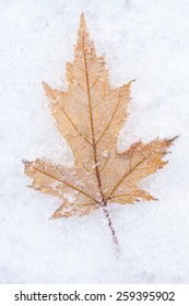 Photo of the maple leaf on snow, closeup
