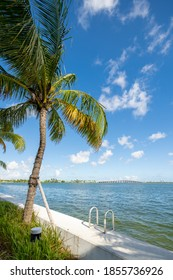 Photo of Miami scene at Edgewater Baywalk with colorful palm tree
