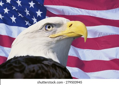 Photo montage: American flag and bald eagle