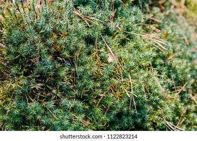 Photo of moss close-up