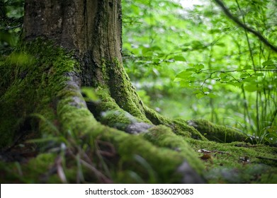 photo of mossy roots of plants that are beautiful green