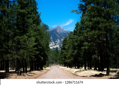 Photo of a mountain between the trees on a dirt road in Flagstaff, Az.