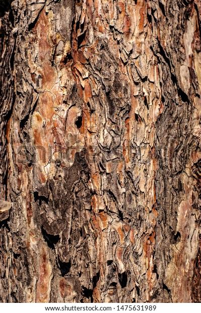 Photo Multicolored Texture Pine Tree Bark Stock Photo Edit Now