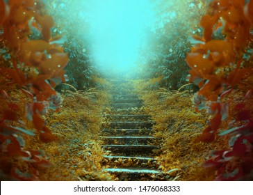 Photo of an old abandoned autumn garden. Dreamlike success staircase leading up to a mysterious future. Beautiful landscape of nature, trees, old steps and fog in October. Free space for text.