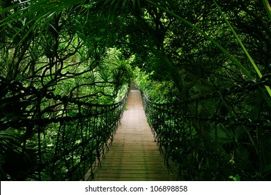 A photo of an old chain bridge in forest
