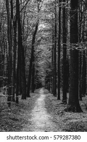 Photo of an old trees with road in a green beautiful forest black and white