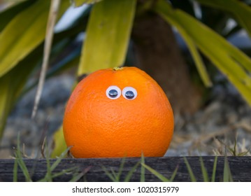 photo of orange with funny eyes on a wooden beam with agawa in background. selective focus used.