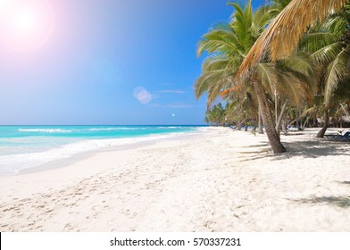 Photo of palm trees and bright white sand on the beach on blue sky background and the sun's rays