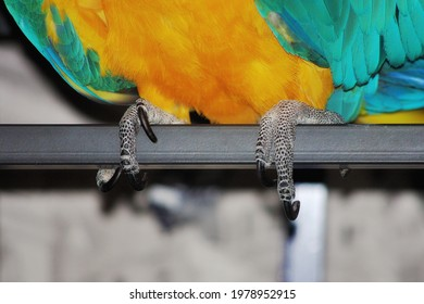 Photo of a paw with parrot claws