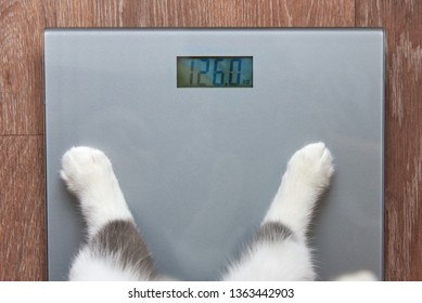 Photo of paws of a cat stand on measuring scales, which show 126 kilograms, close-up