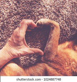 photo of a person and a dog making a heart shape with the hand and paw in natural sunlight with rays of sunshine toned