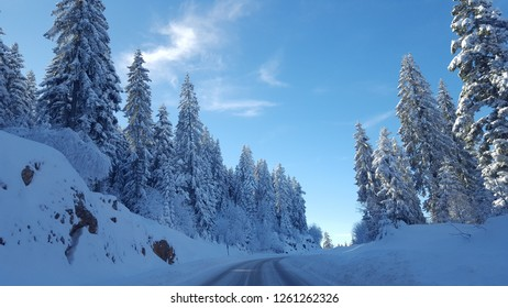 The photo was photographed near Mount Jahorina 12.06.2017.