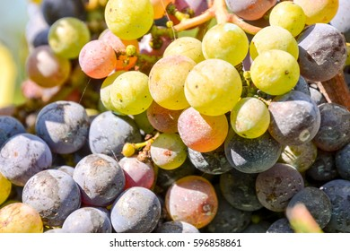 Photo picture of Fruit Background Texture Pattern