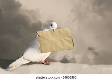 Photo of pigeon with letter on sky background in sepia tones