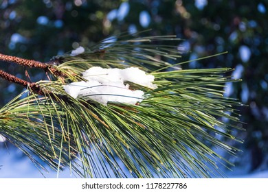 A photo of a pine or cedar bough with a patch of snow on it.