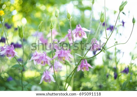 Photo Pink Flowers Garden Common Names Stock Photo Edit Now