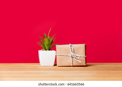 photo of plant in pot and cute gift on the wonderful pink studio background
