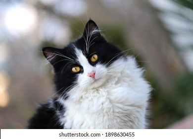 Photo portrait of a beautiful street kitten illuminated by the sun. Protection of stray animals cats design