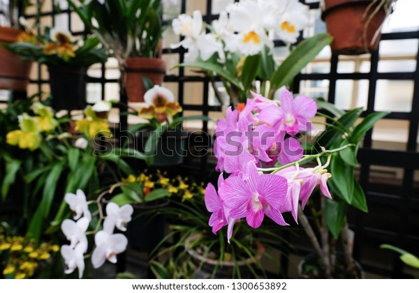 A photo of potted orchids