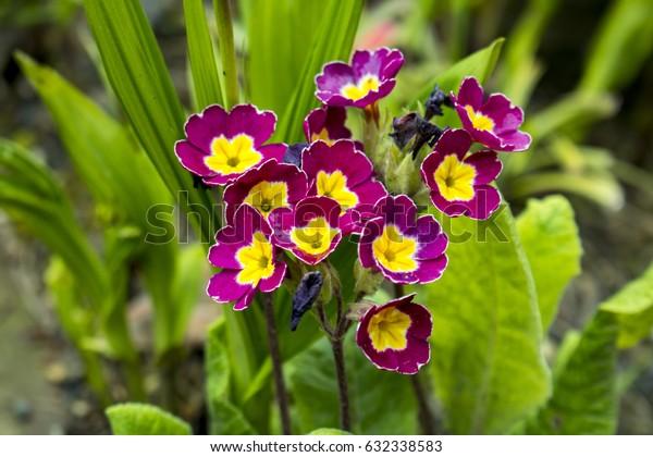 photo purple yellow flowers closeup
