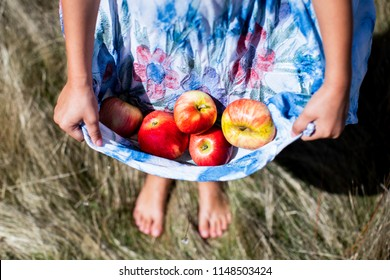 Photo of red ripe apples in little girls dress