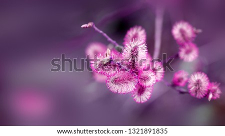 Photo of retro spring background with pink buds on trees