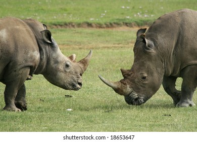 a photo of a rhino taken in Kenya