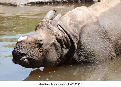 Photo of rhinoceros