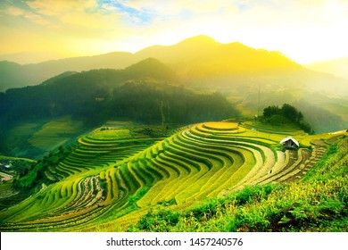 photo from rice field in Vietnam