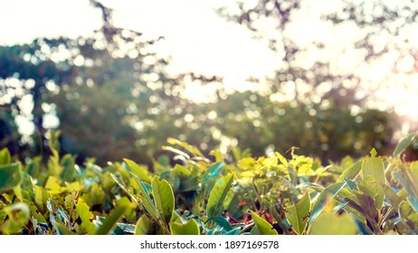 Photo A row of green trees and bushes against a blue sky