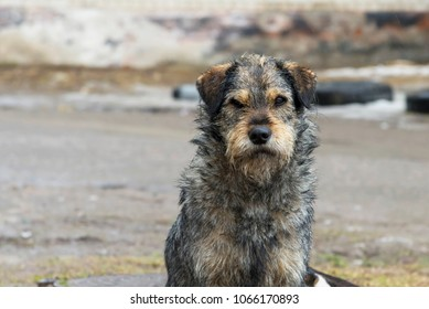 Photo of sad homeless dog on a cold spring afternoon