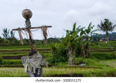 photo of scarecrow in field in Indonesia. Agricultural detail