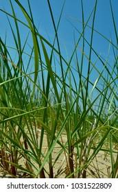 Photo of Sea grass on a beach