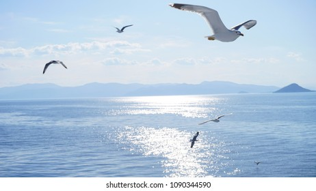 Photo of sea gull flying next to cruising ship in the Aegean with deep blue sky
