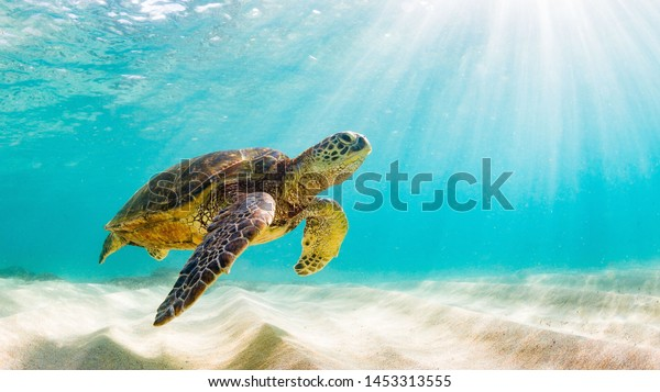 photo of Sea turtle in the Galapagos island