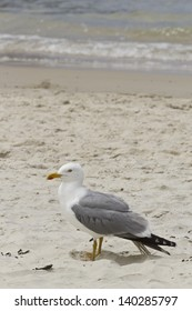 Photo of a seagull on the sand of the beach in Pontevedra, Spain.