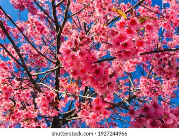 Photo of selected focus of pink flower in the park.