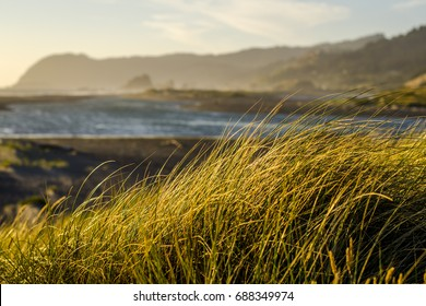 Photo with shallow depth of field of the wild Oregon coast, focus on the beach grass blowing in the wind in golden sunset light, in the blurry background are the silhouettes of mountains and the sea.