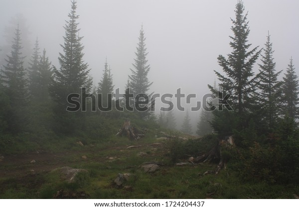 the photo shows apath running through a fjrest in the montains