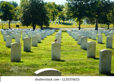 Photo shows a bird resting on a tombstone at Arlington Cemetery on a sunny day