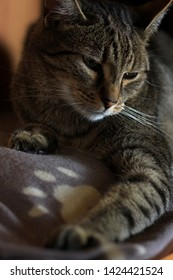 The photo shows tomcat who lying on the blanket.