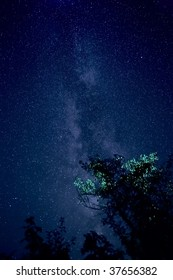 Photo of sky of stars - central part of via lactea (cluster of stars) on trees